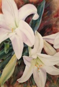 "Easter Lilies • 22"" x 15"" watercolor on 300 lb. Arches"