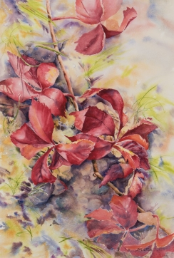 "Virginia Creeper • 22"" x 15"" Watercolor/300lb Arches"